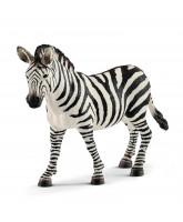 Zebra - samica